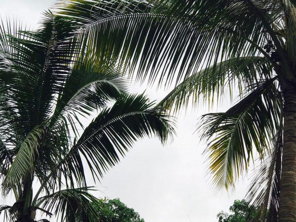 Palm Tress Happiness Yoga
